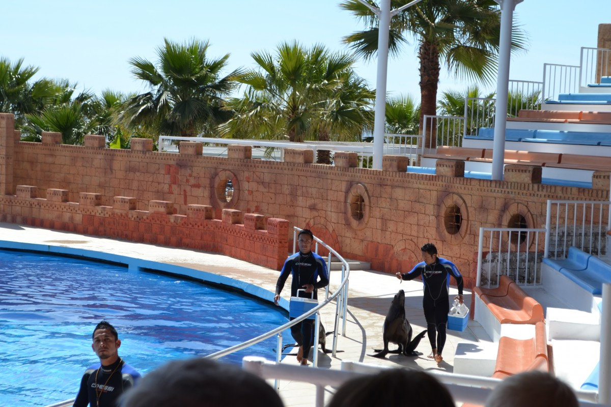 Dolphin and seal show at Sea Alanya