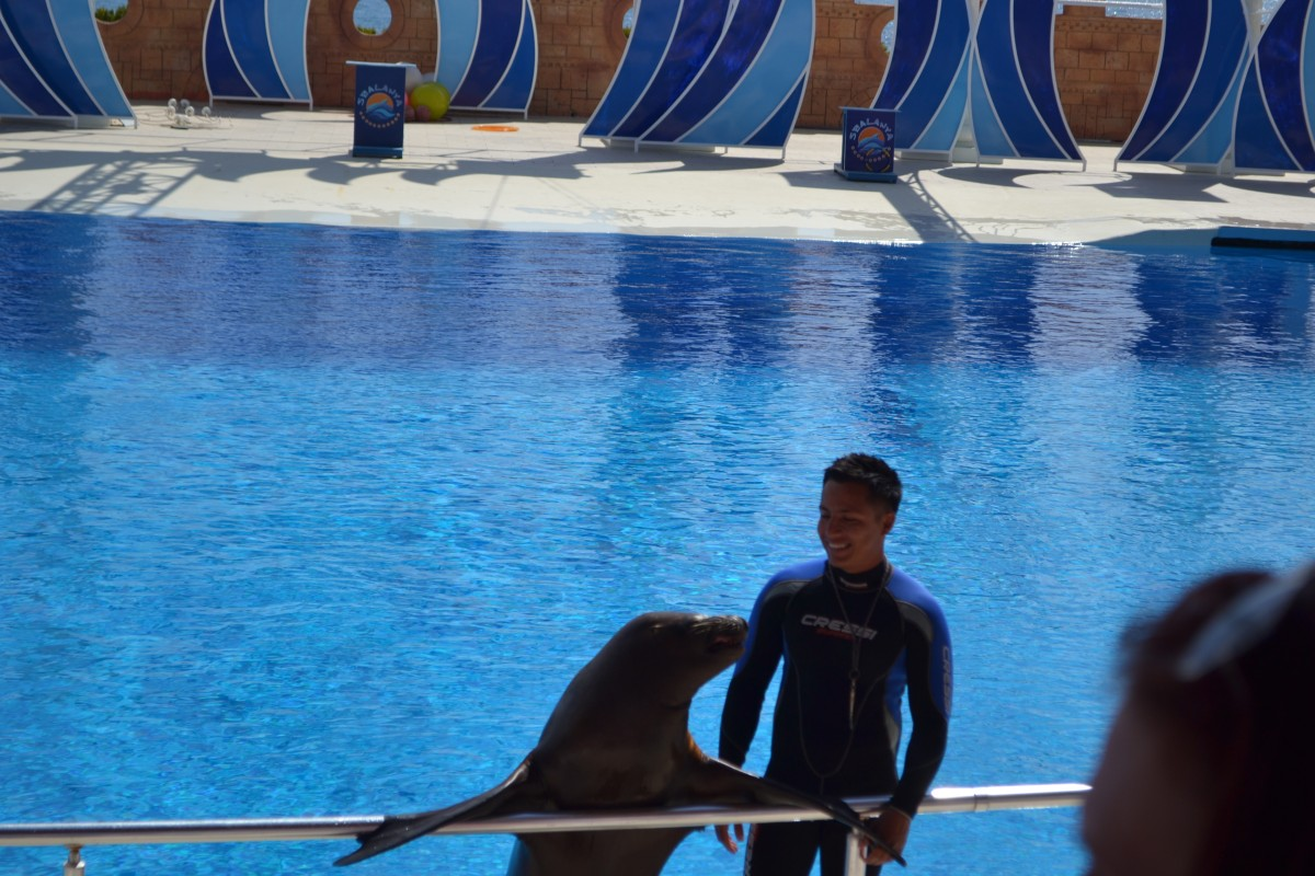 Seal show at Sea Alanya