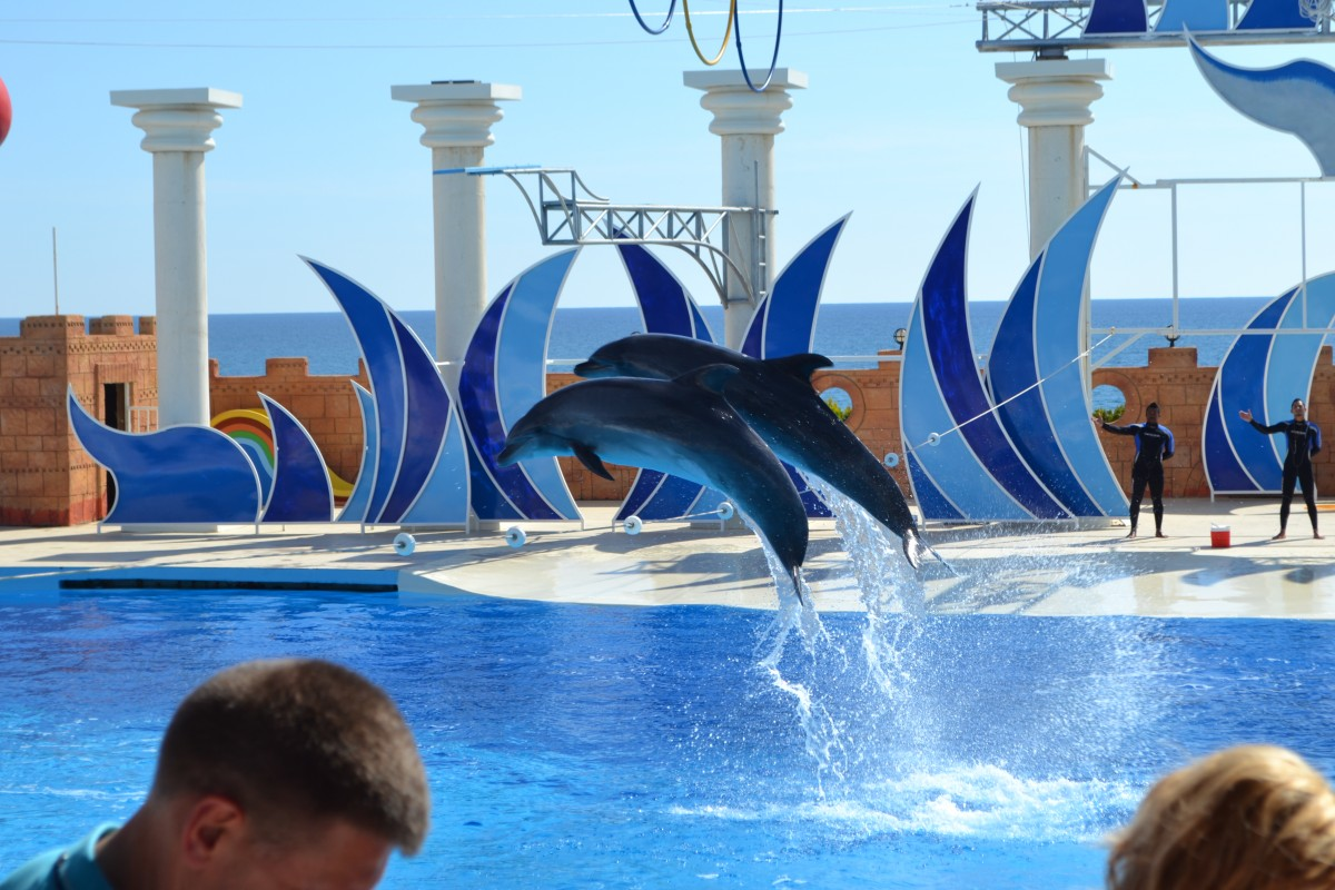Dolphins at Sea Alanya