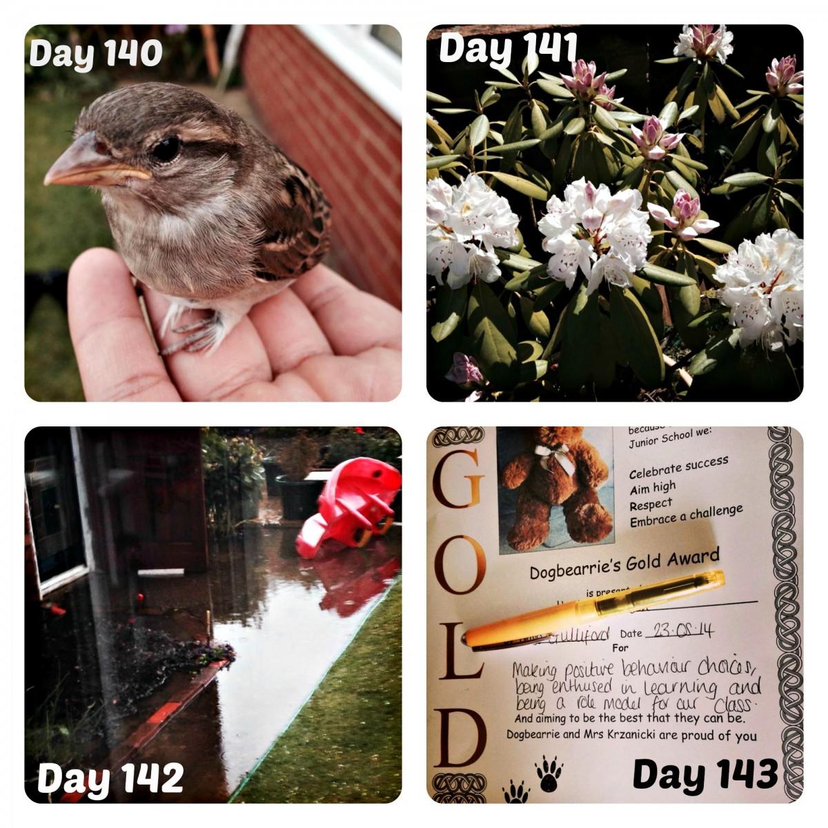 week 21 collage