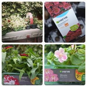 B&Q plants