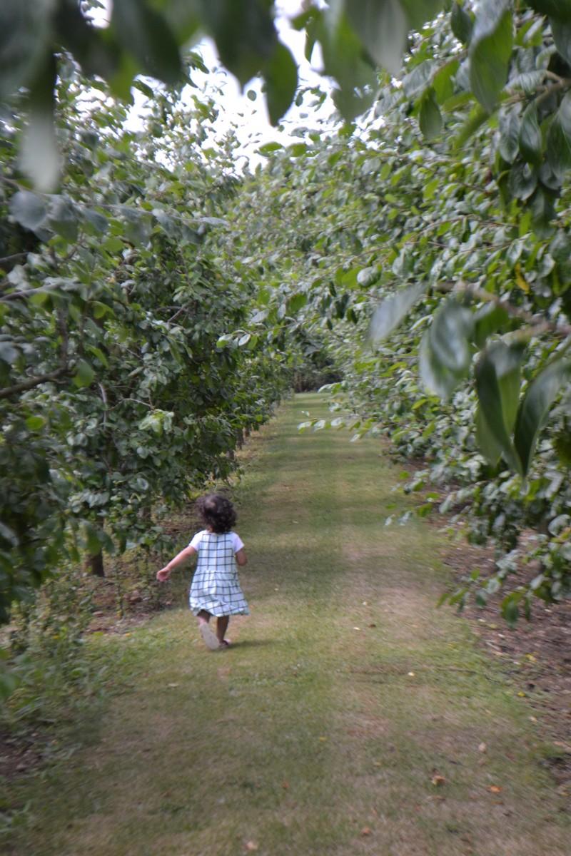 Bee enjoyed running through the plum trees