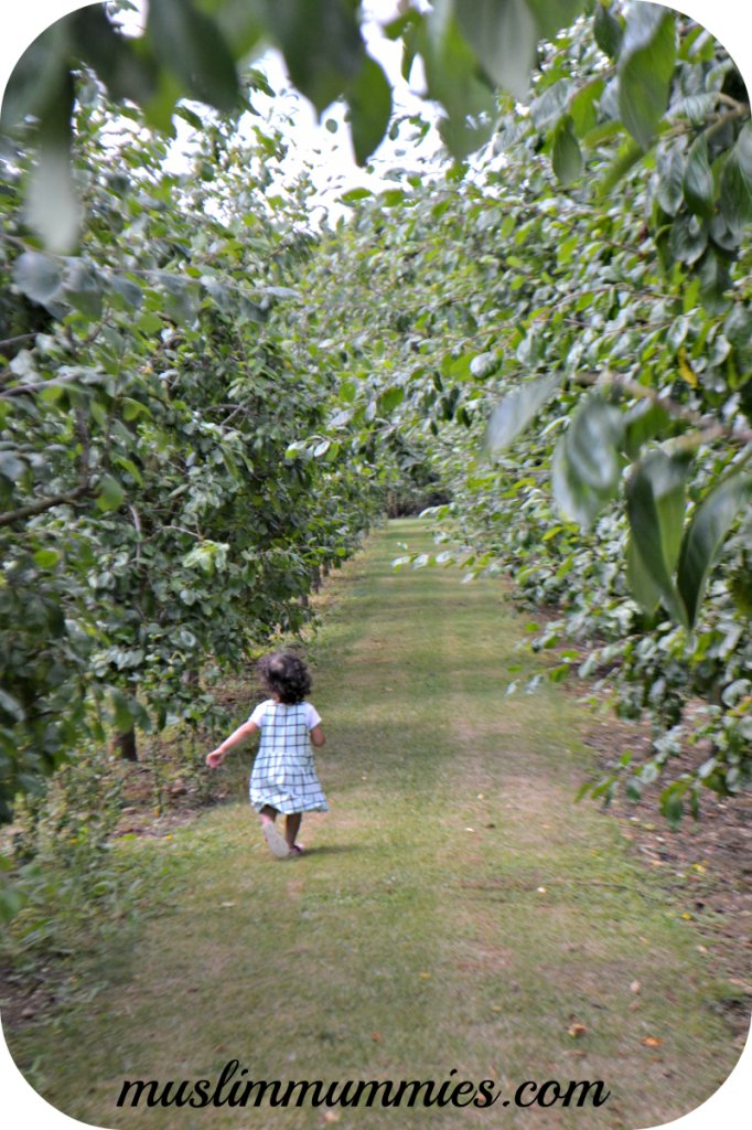Running through plum trees