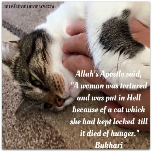 Allah's Apostle said, A woman was tortured and was put in Hell because of a cat which she had kept locked till it died of hunger.