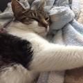 Relaxing Rosie