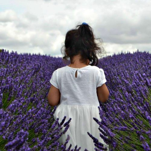 Hitchen Lavender Fields