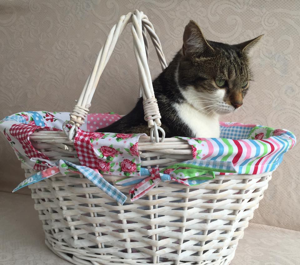 Cat in a basket