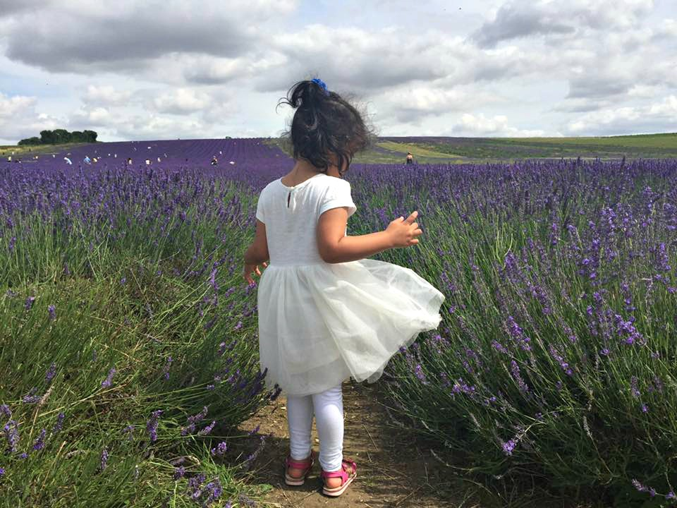 Hitchen Lavender field