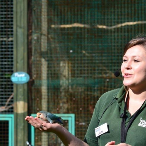 Birds of Paradise talk at Paradise Wildlife Park