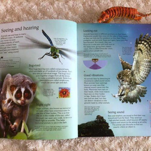 Inside of World of Animals