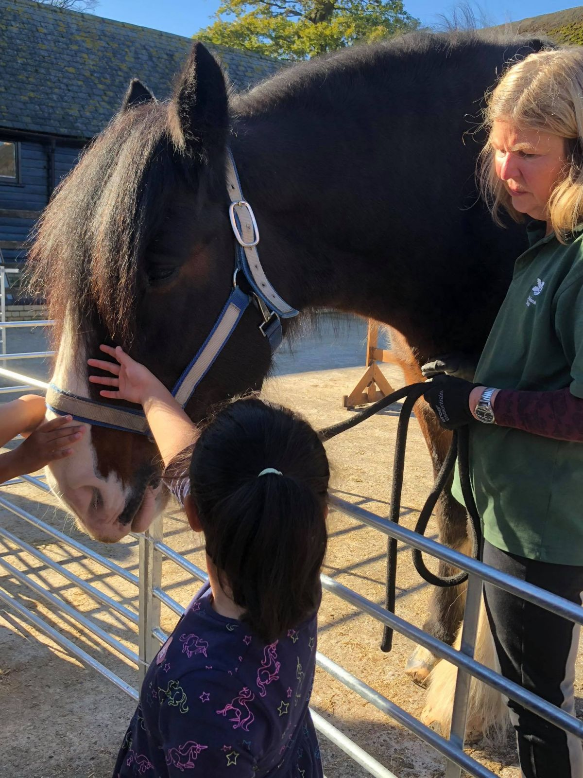 Patting a Shire Horse
