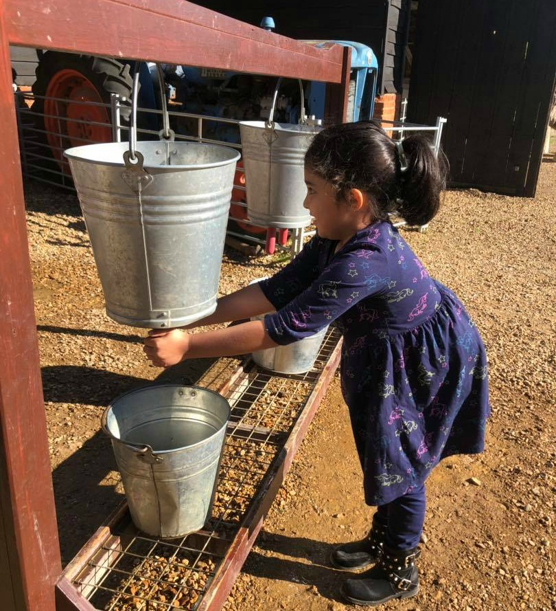 Pretending to milk a cow at Home farm with buckets