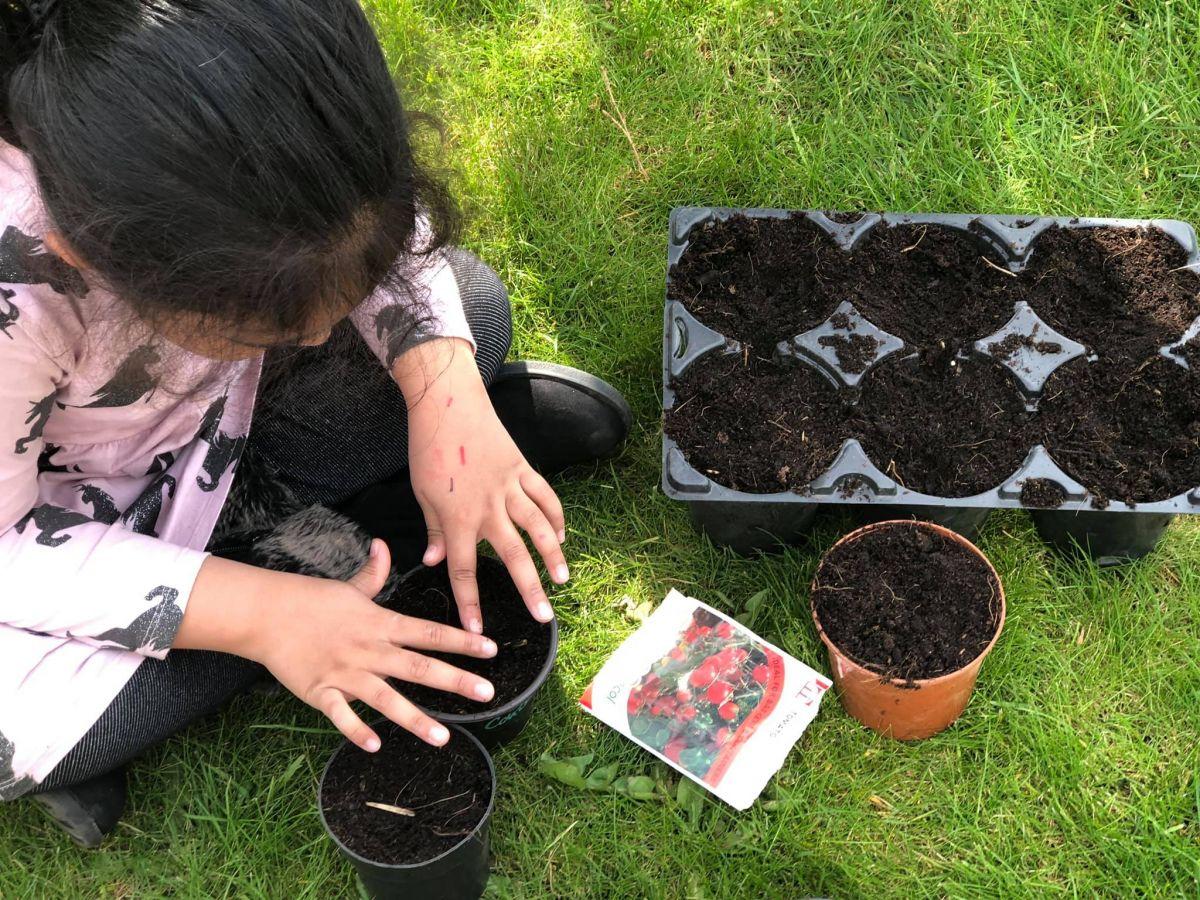 Planting tomato seeds
